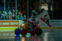 KELOWNA, CANADA - JANUARY 3: Rocky Racoon the mascot of the Kelowna Rockets enters the ice against the Tri-City Americans on January 3, 2017 at Prospera Place in Kelowna, British Columbia, Canada.  (Photo by Marissa Baecker/Shoot the Breeze)  *** Local Caption ***