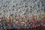 Starfish on cave wall, Sitka, Alaska<br />