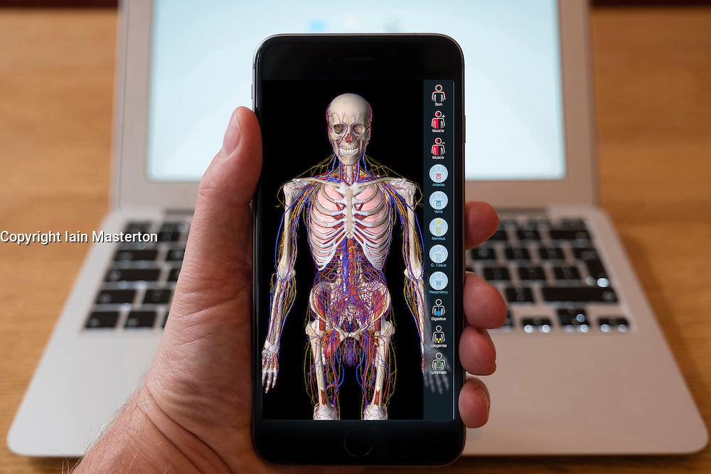 Using iPhone smartphone to display anatomy education app of human body.