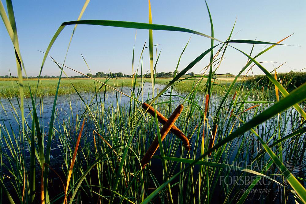 Arbor Lake Wildlife Management Area, Lancaster County, Nebraska.