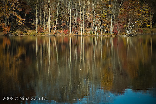 Fall leaves reflected in the lake at Goldensbridge, in upstate New York.