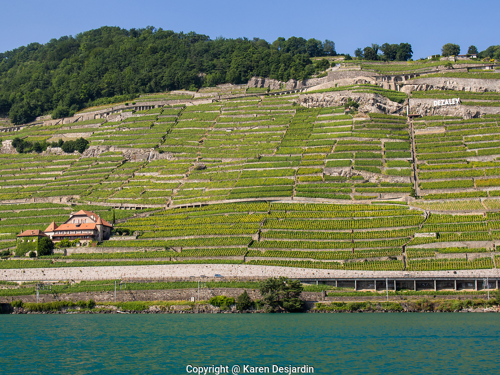 The terraced vineyards of Lavaux as seen from Lac Léman (Lake Geneva).