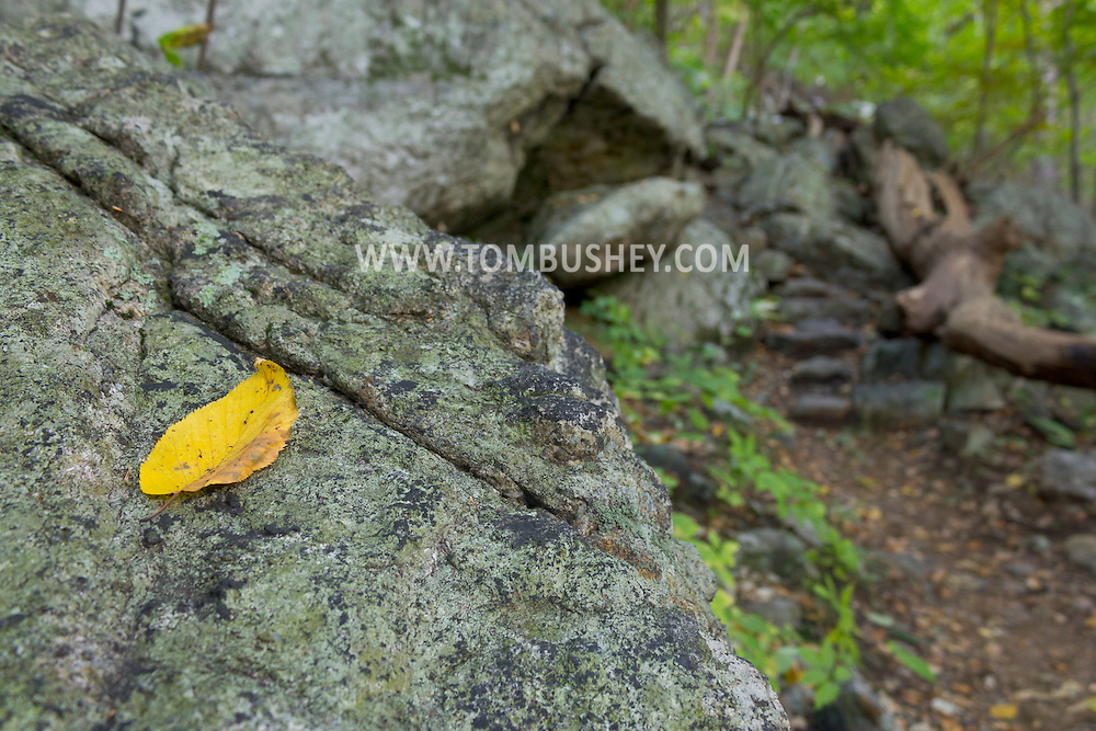 Vernon, New Jersey - A yellow leaf on a boulder as the Appalachian Trail heads up Wawayanda Mountain on Sept. 22, 2012.