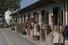 Stables 2013
