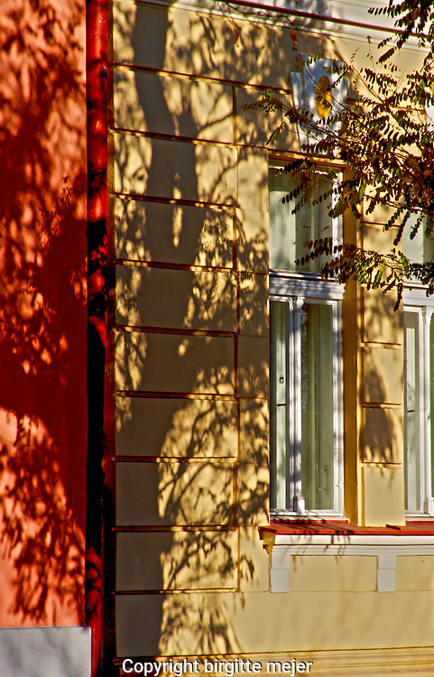 The shadow on a Tree on a yellow and red brick wall. Prague 2012