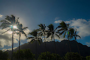 Sunset, Coconut Palm Tree, Kualoa Park, Oahu, Hawaii
