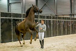 Missiaen Simon, BEL, Charlie<br /> Horse Inspection - The Dutch Masters<br /> © Hippo Foto - Sharon Vandeput<br /> 14/03/19