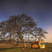 Star trails with oak tree, northern California.