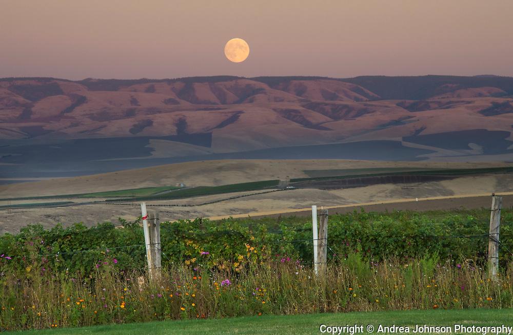 Blood Moon rising over Doubleback McQueen Vineyard, Walla Walla