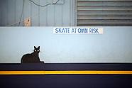 Skateworld Mordiallic