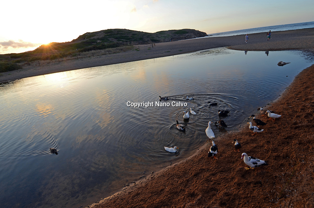 Lake with ducks in Binimel-la beach, Es Mercadal, Menorca