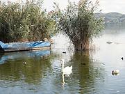 Greece, Macedonia, Castoria; Fishing Boat and swan  on Lake Orestiada