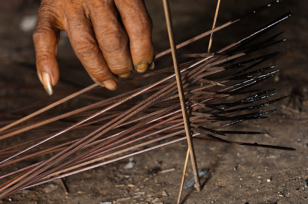 Huaorani Indian, Kempere Tega making Curare tipped darts. Curare is one of the most toxic poisons known to man and is made from a liana. The poison is boiled on the fire. The dart tips are dipped into the poison which hardens into a shiny, lacquer-like coating. They are then ready for the hunt. A small tuft of kapok fluff is plied into a cuff at the blunt end of the dart so as to seal the blowgun airtight. A sharp piranha tooth is used to cut a barb into the dart about 10 cm from the tip so that it will break if the victim tries to remove the dart before the poison takes effect. <br /> Bameno Community. Yasuni National Park.<br /> Amazon rainforest, ECUADOR.  South America<br /> This Indian tribe were basically uncontacted until 1956 when missionaries from the Summer Institute of Linguistics made contact with them. However there are still some groups from the tribe that remain uncontacted.  They are known as the Tagaeri &amp; Taromenane. Traditionally these Indians were very hostile and killed many people who tried to enter into their territory. Their territory is in the Yasuni National Park which is now also being exploited for oil.