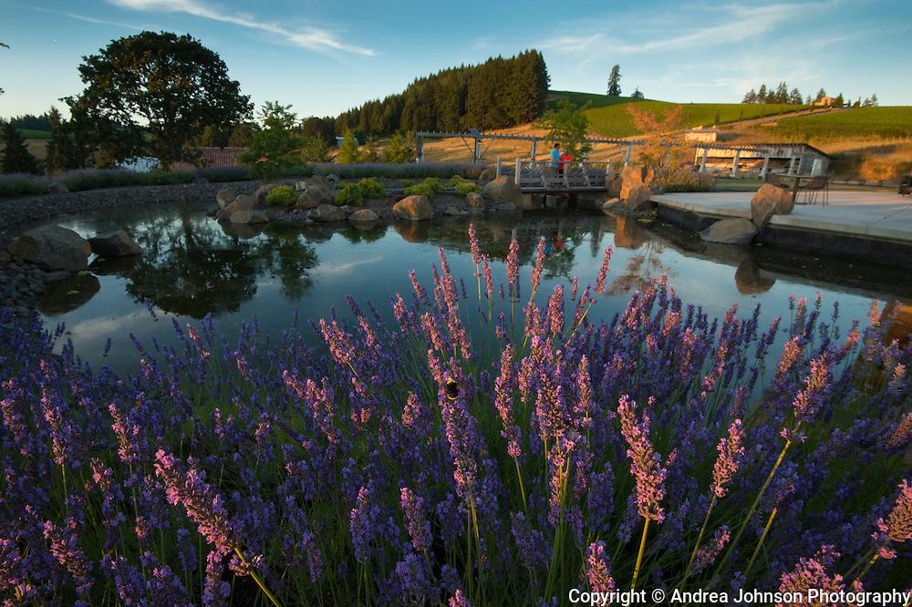 Saffron Fields, Willamette Valley, Oregon