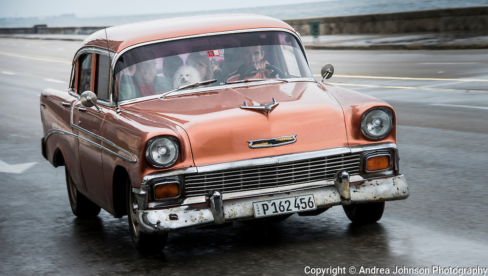 """It's not just tourists in the classic cars.  According to Chris Baker's """"Cuba Classics' book, """"About 60,000 cars - one in every eight cars in contemporary Cuba (compared to one in every 400 cars in the USA) - is a pre 1960's American model."""""""
