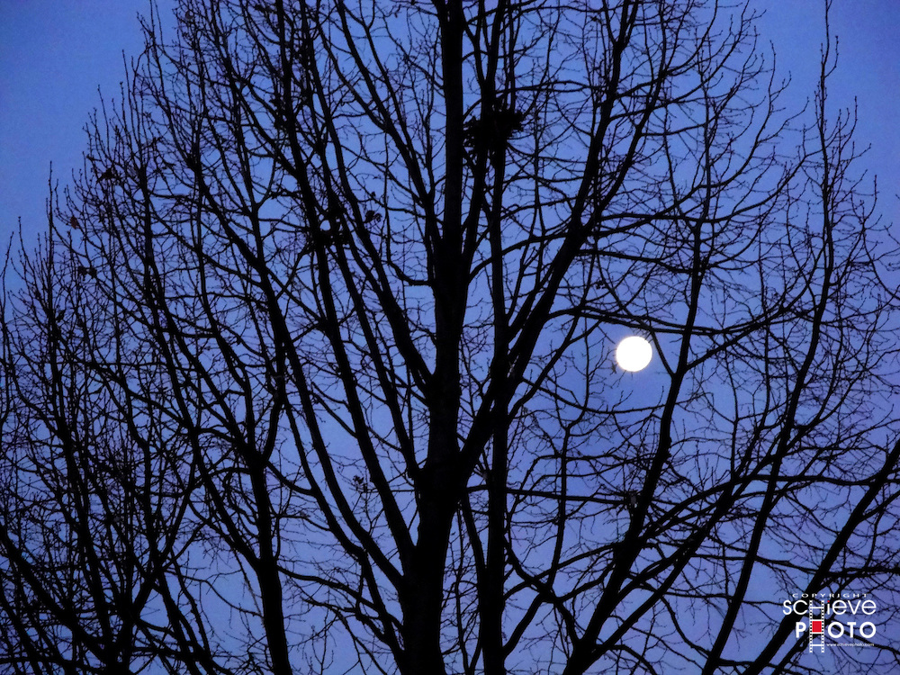 Moon behind bare tree.
