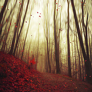 Forest in autumn with falling leaves<br /> Redbubble Prints: http://rdbl.co/2ht6Y3j<br /> <br /> Society6 Prints: http://bit.ly/2zuWiIC