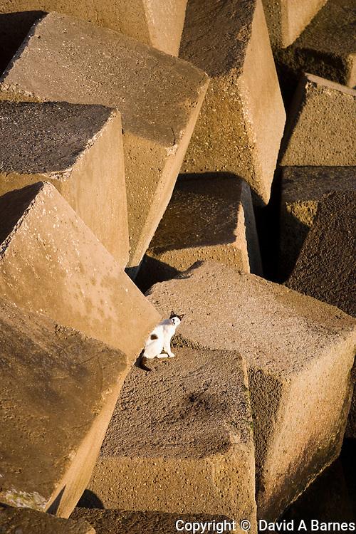 Cat among blocks, Cadiz, Andalusia, Spain