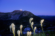 Bear grass and moon rising over the Northwest Peak Scenic Area. Kootenai National Forest in the Purcell Mountains, northwest Montana.