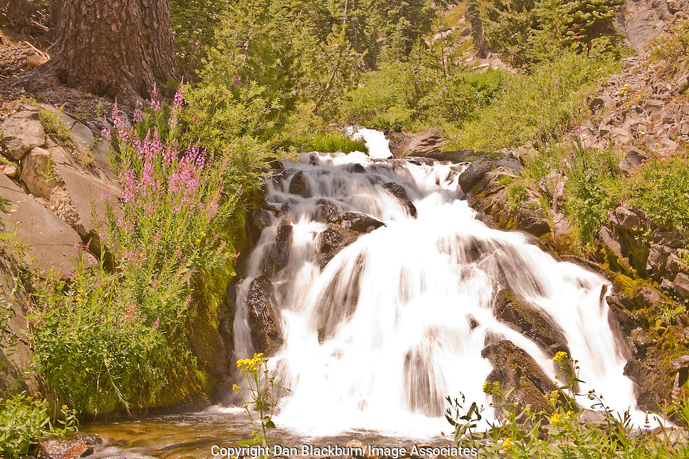 Kings Creek cascades over rocks in the forest of Lassen National Park California.