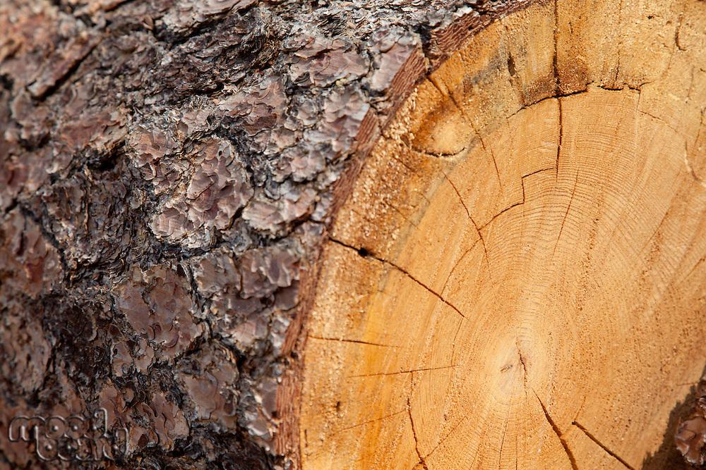 Close-up of chopped tree stump