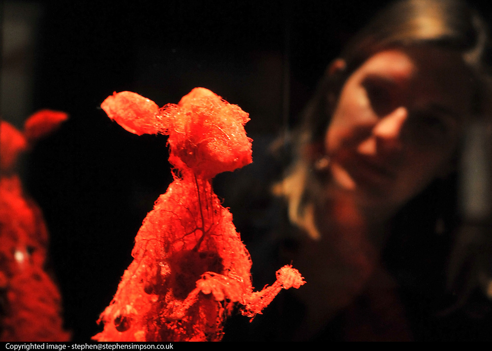 © Licensed to London News Pictures. 03/04/2012. London, UK A woman looks at a plastinated hare. The launch of The Natural History Museum's Animal Inside Out exhibition. The exhibition is the UK premiere from the team behind Gunther von Hagens' Body Worlds shows, with almost 100 specimens on show. Animal Inside Out runs from April 6 April to September 16 at the Natural History Museum, London. Photo credit : Stephen SImpson/LNP