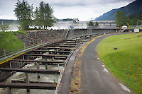 Fish ladder at Bonneville Dam on the Columbia River, OR.