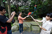Singapore Zoo. Visitors can take souvenir photos with Ara parrots for a small fee.