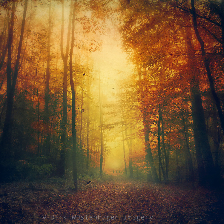 Atmospheric autumn morning walk through a forest.<br /> <br /> Prints &amp; more: https://society6.com/product/autumn-morning-mood_tapestry?curator=dirkwuestenhagenimagery