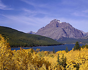 AA01132-01...MONTANA - Fall color along the shore of Lower Two Medicine Lake in Glacier National Park.