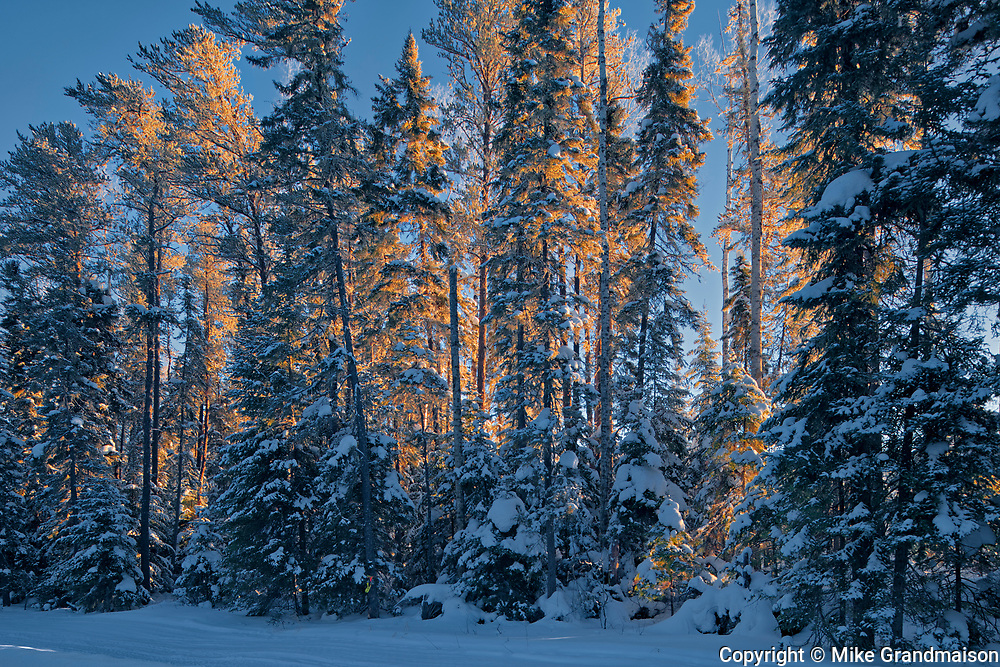 Hoarfrost and snow covered trees in the boreal forest<br />Ear Falls<br />Ontario<br />Canada