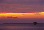 Florida Bay at daybreak, with pelicans and Red Mangroves, Flamingo, Everglades National Park, Florida