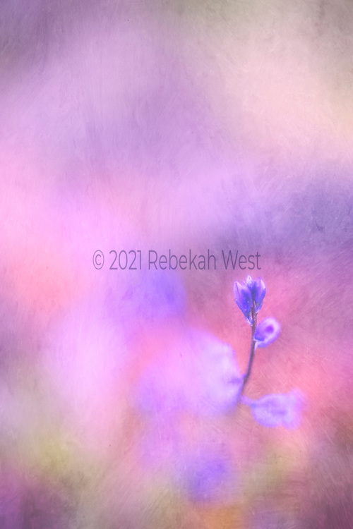 bright vivid soft painted vertical field with a single stalk of fluer buds lower right corner, accents in greens peach, purple, orange, rose, flower art, feminine, high resolution, licensing, iridescent, 3744 x 5616