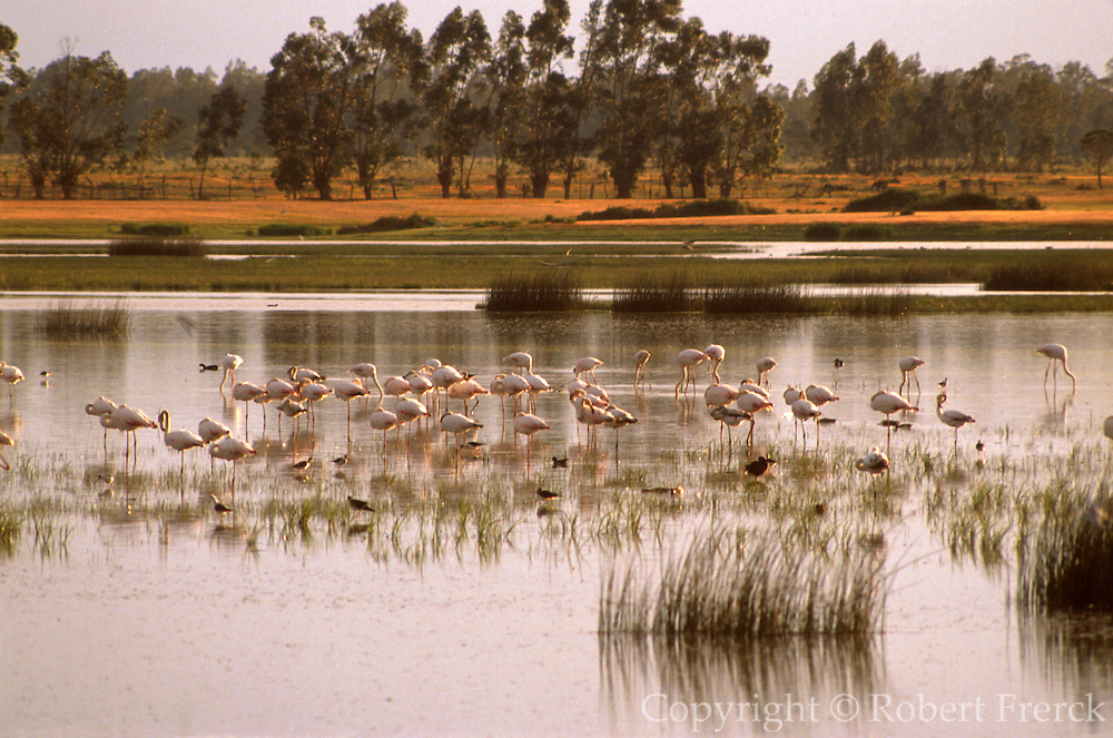 SPAIN, ANDALUSIA La Doñana National Park flamingos