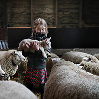 Nederland, Zunderdorp , 3 maart 2014<br /> Julia (7) houdt 1 van de eerste nieuw geboren lammetjes vast op boerderdij de Stadshoeve<br /> Foto:Jean-Pierre Jans