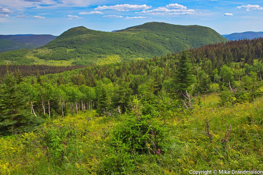 Chic-Chocs Mountains (Appalachian Mountains)  from the trail of 'Le mont Ernest-Laforce'<br />Parc national de la Gaspésie<br />Quebec<br />Canada