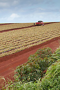 Pineapple field with red dirt and a red truck.