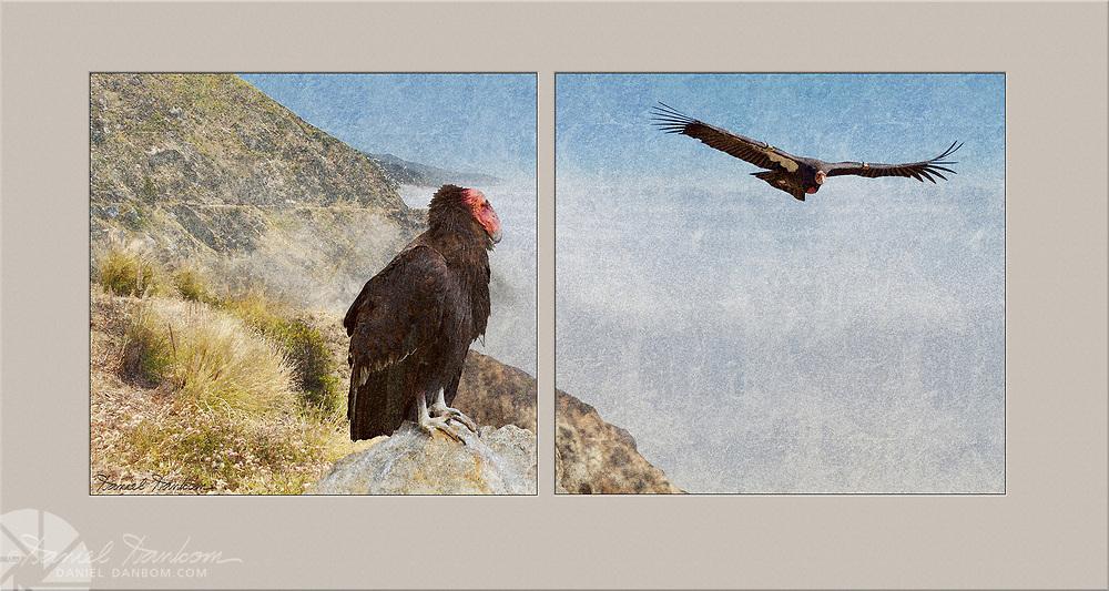 Condor Diptych, artwork, vintage, Big Sur Coast,