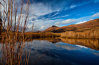 Grasses surround a tranquil pond that reflects clouds and an azure sky on Kodiak Island, Alaska.