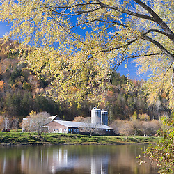 A farm on the Connecticut River in Maidstone, Vermont.  Silver maple.  Fall.