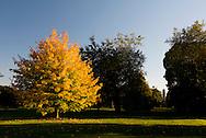 Autumn foliage and the Japanese pagoda in Kew Gardens, London, UK