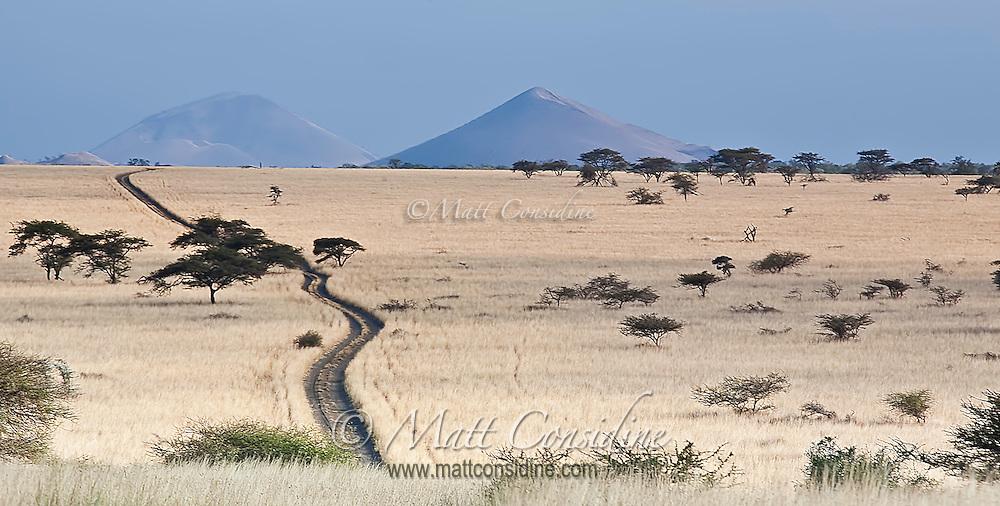 Road to Chyulu Hills crossing miles of open grassland savanna dotted with acacia trees, Kenya, Africa (photo by Wildlife Photographer Matt Considine)