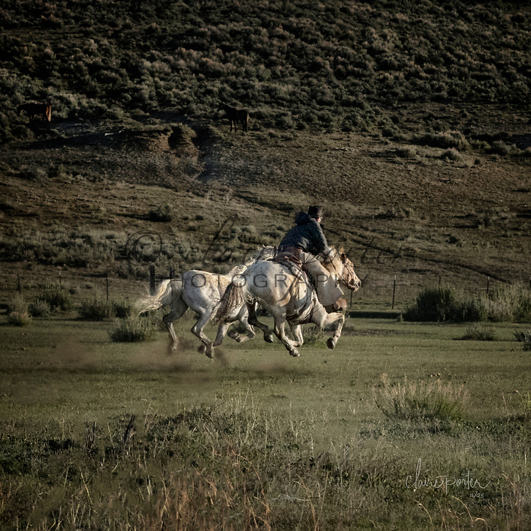 These gorgeous images come from the Annual Sombrero Horse Drive outside of Craig, Colorado. This is a once in a lifetime opportunity and experience for the horses, riders, cowboys and the photographers. I hope you enjoy viewing them. <br /> <br /> TO ORDER; <br /> https://claireporterphotography.pixieset.com/coloradosombrero17/<br /> <br /> Any enlargement may be ordered by emailing me, too. I look forward to consulting with you and creating your very own fine art image. <br /> <br /> Thank you!