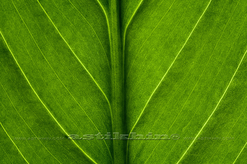 The structure of green leaf.