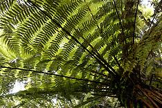 New Zealand, varens, ferns