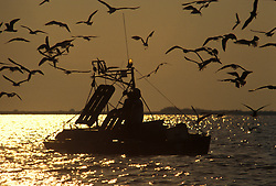 Stock photo of seagulls surrounding a small fishing boat at sunset