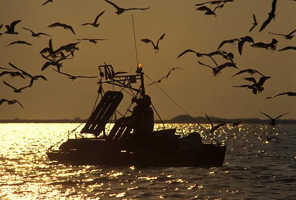 Stock photo of seagulls surrounding a small fishing boat at sunset