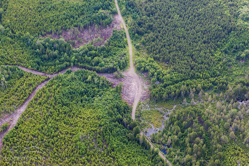 Logging roads in the Cold Stream watershed in industrial timberland in Maine's Northern Forest.