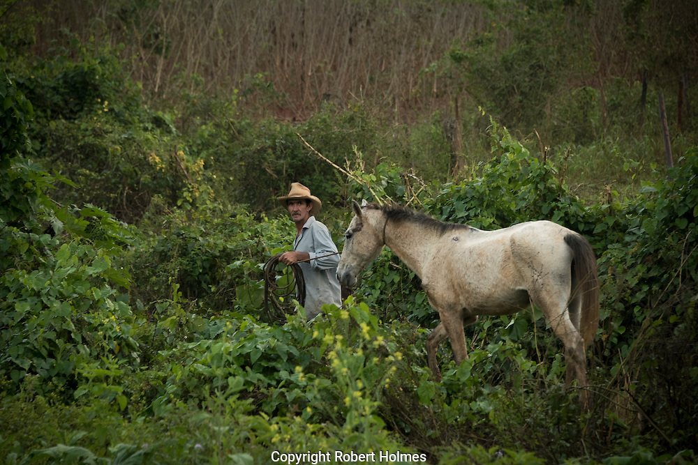 Vinales, Cuba, tobacco farming in the Vinales Valley