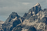 Nine Geese Flying North? in September. Grand Teton National Park. Image taken with a Nikon D2xs and 200-400 mm VR lens (ISO 100, 200 mm, f/8,, 1/180 sec).